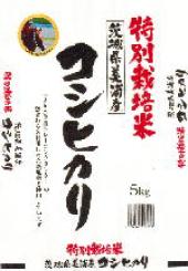 特別栽培米茨城県美浦村コシヒカリ